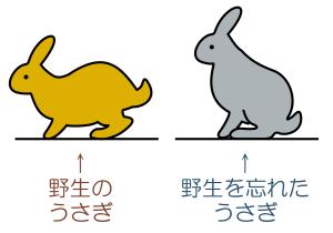 rabbit0719